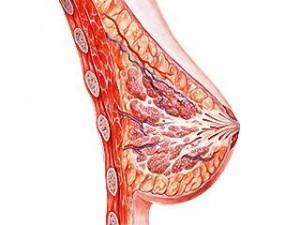anatomie-du-sein